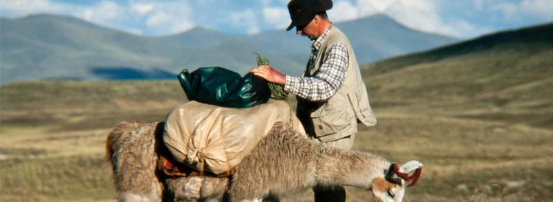 foredrag med hest og lama